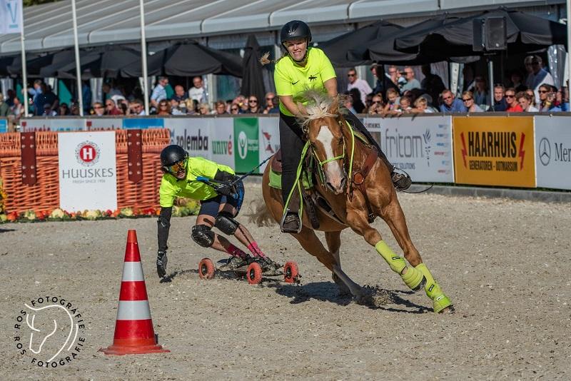 Horse boarding 2